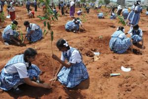 plantingtreesindia