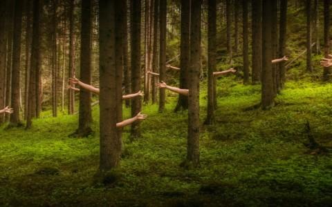 Ook bomen hebben een WOOD WIDE WEB [view]