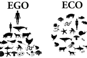 ego versus eco: evolutietrends 2019