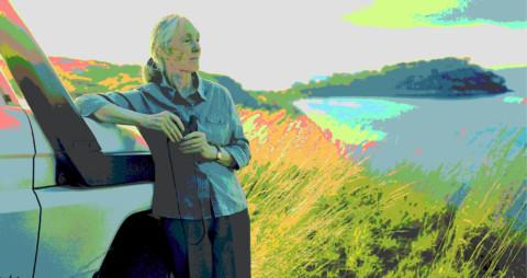 De ROOTS & SHOOTS formule van Jane Goodall [view]