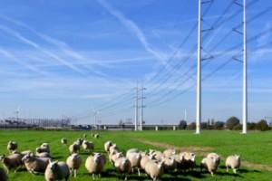 Hoogspanningsnetverbinding tussen Doetinchem en het Duitse Wesel