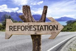 Herbebossing in Latijns-Amerika