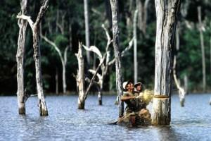 Verwoesting van de Amazone in Brazilië